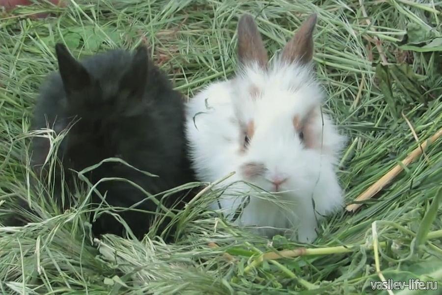 «Кроликопарк», Саки