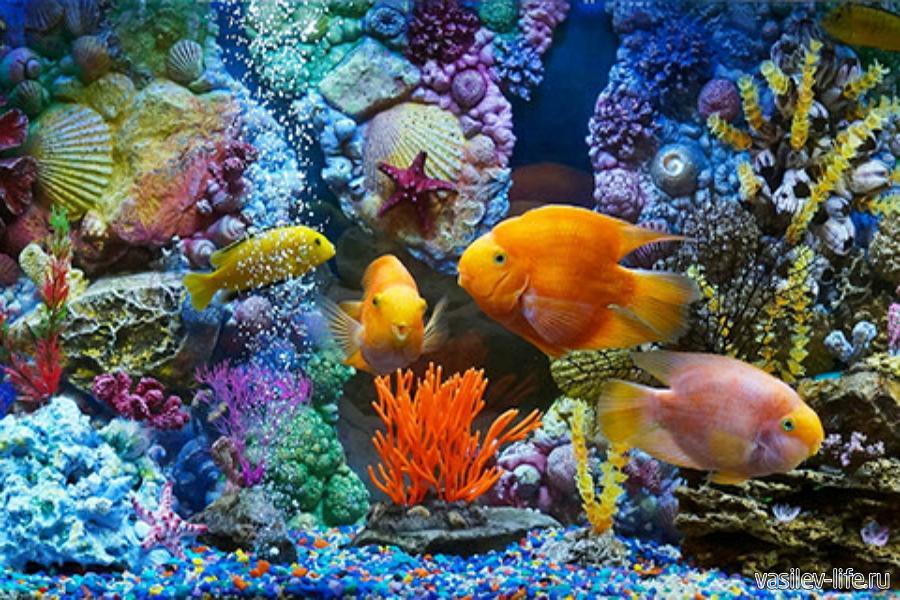 Аквапарк «Коктебель», аквариум