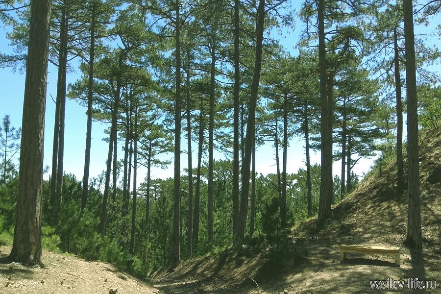 Боткинская тропа в Ялте