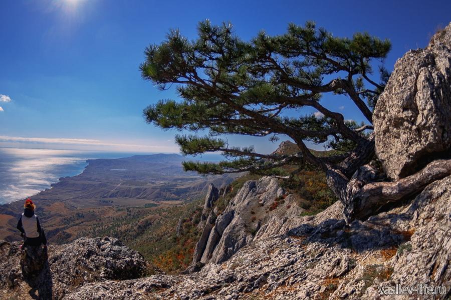 Гора Эчки-Даг, сосна Крыло дельтаплана