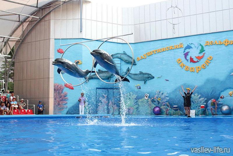 Дельфинарий «Акварель»