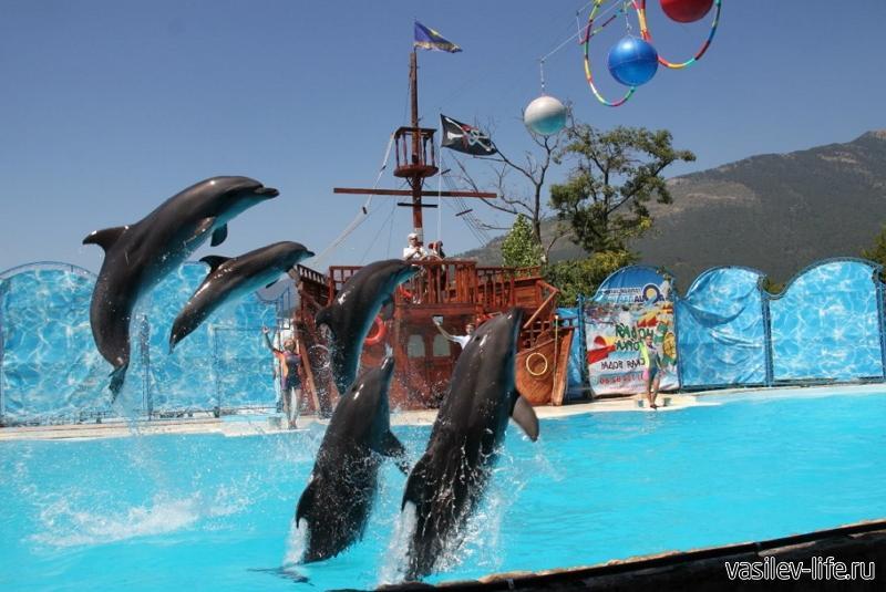 Дельфинарий «Акватория», Ялта