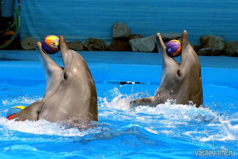 Дельфинарий «Немо», Алушта