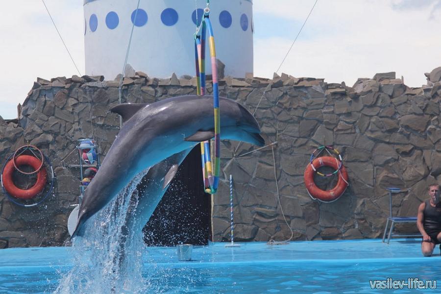 Дельфинарий, Ейск