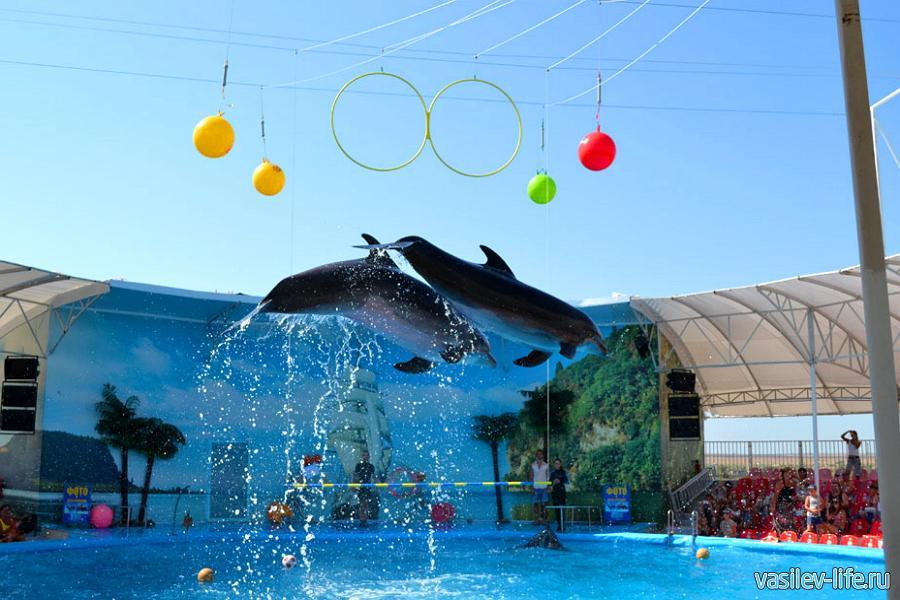 Дельфинарий Немо внутри