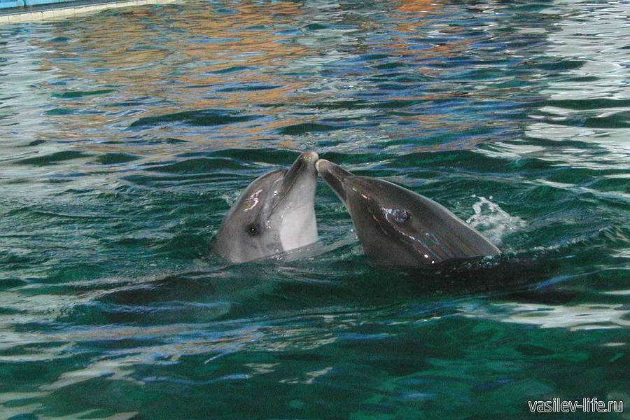 Дельфинарий в Партените