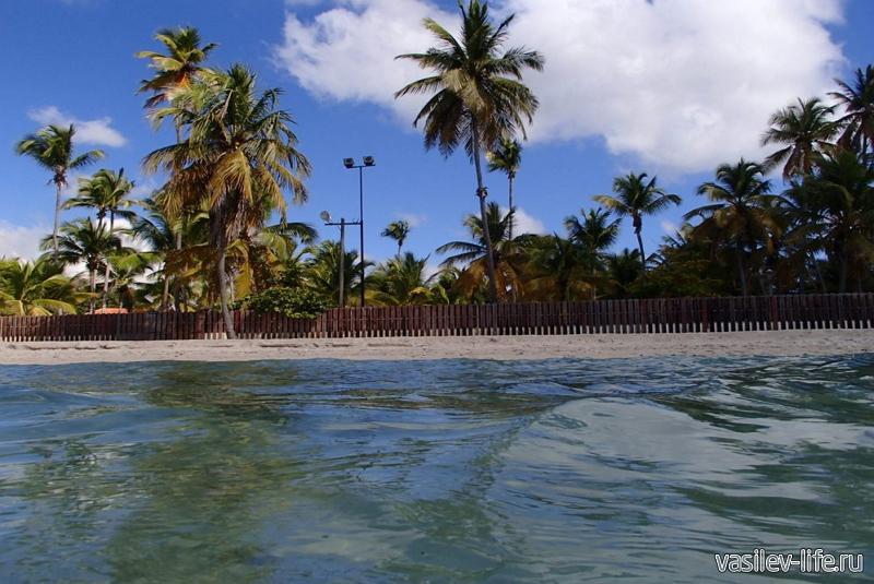 Доминиканы в декабре