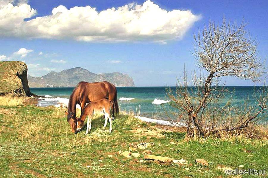Животные Крыма