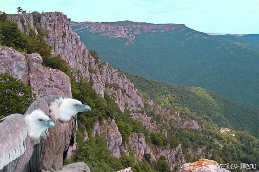 птицы в горах крыма воск придает внутренним