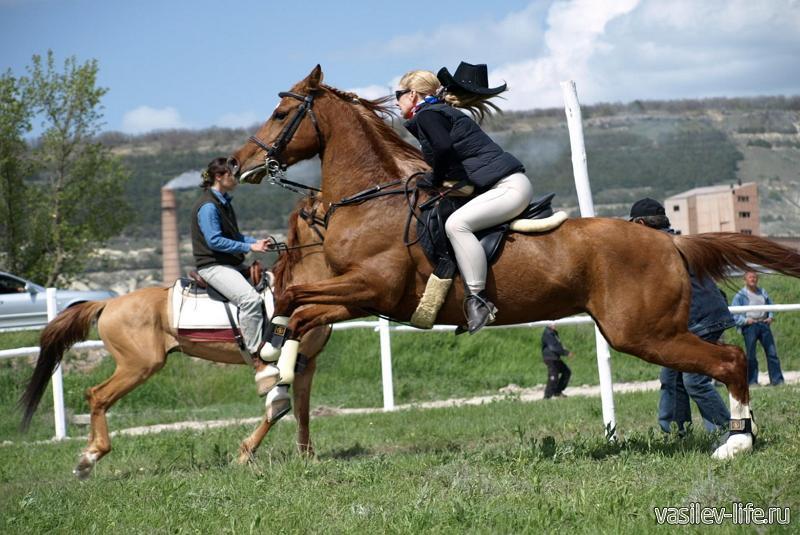 Клуб конного спорта «Гамма»