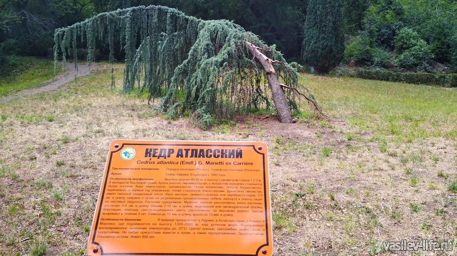 Массандровский парк