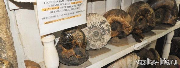 Музей «Беловодье» (аммониты)