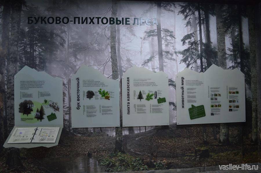 Музей Кавказского биосферного заповедника в Гузерипле (Адыгея) (7)
