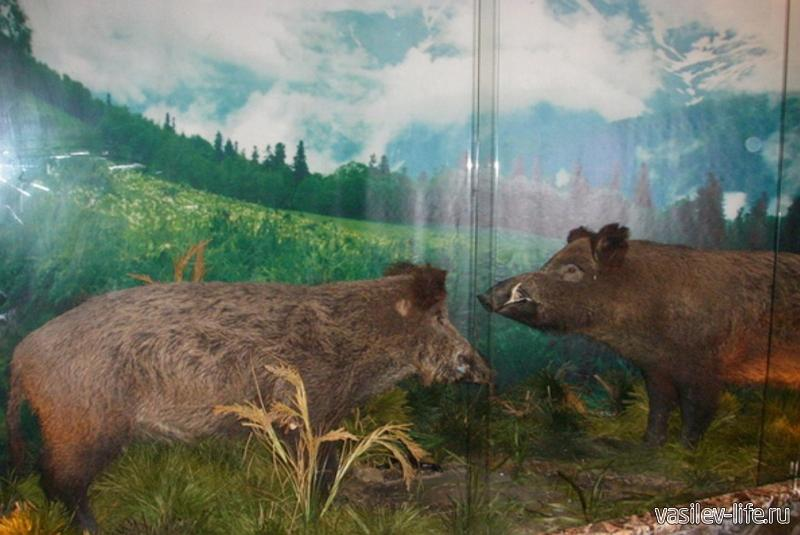 Музей Кавказского биосферного заповедника 2