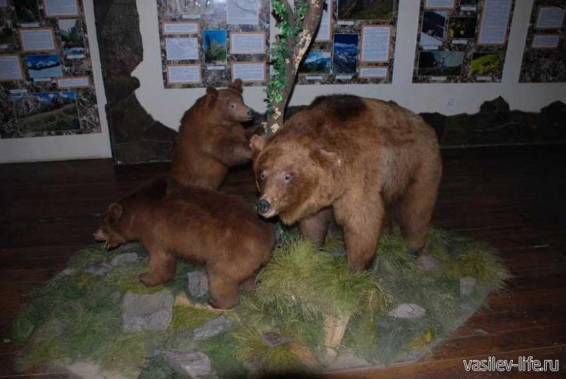 Музей Кавказского биосферного заповедника 3