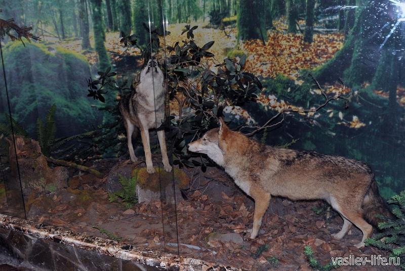Музей Кавказского биосферного заповедника 4
