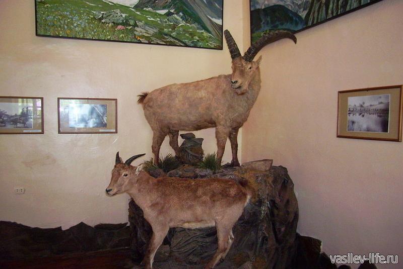Музей Кавказского биосферного заповедника 5