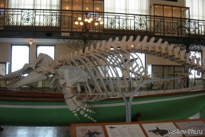 Музей океанографии в Керчи4