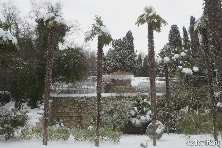 Никитский ботанический сад в январе, только выпал снег - красота