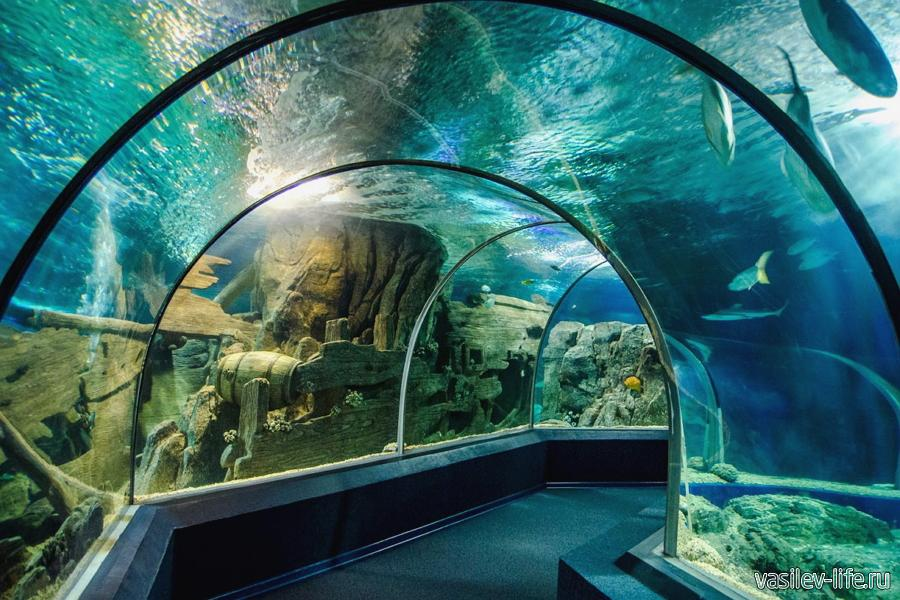 Океанариум в Адлере
