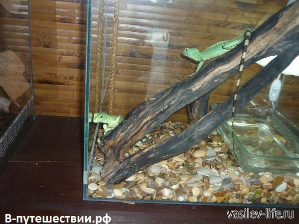 Парк-бабочек-в-Ростове-на-Дону2