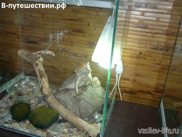 Парк-бабочек-в-Ростове-на-Дону3