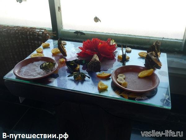 Парк-бабочек-в-Ростове-на-Дону6