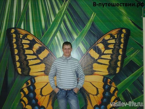 Парк-бабочек-в-Ростове-на-Дону8