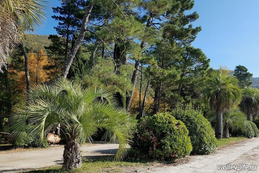 Приморский парк в Гагре в сентябре