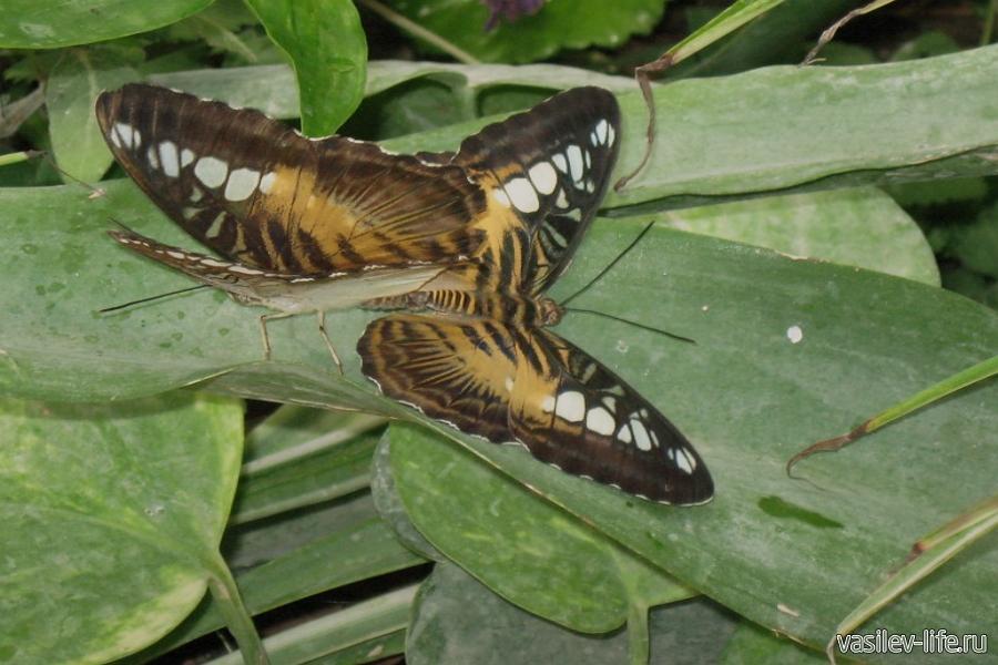 Сад бабочек, Ялта