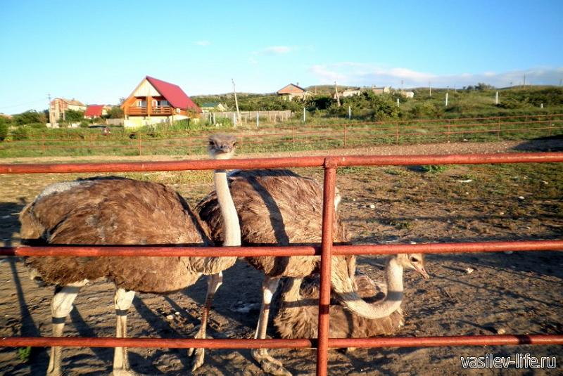 Страусиная ферма «Экзотик»