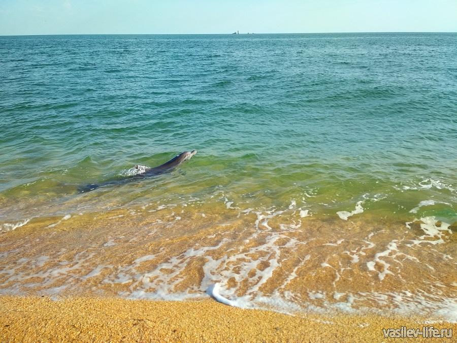 Увидел дельфина